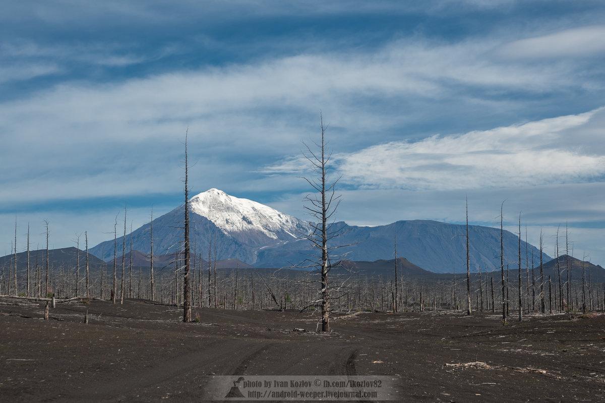 Мертвый лес - Ivan Kozlov
