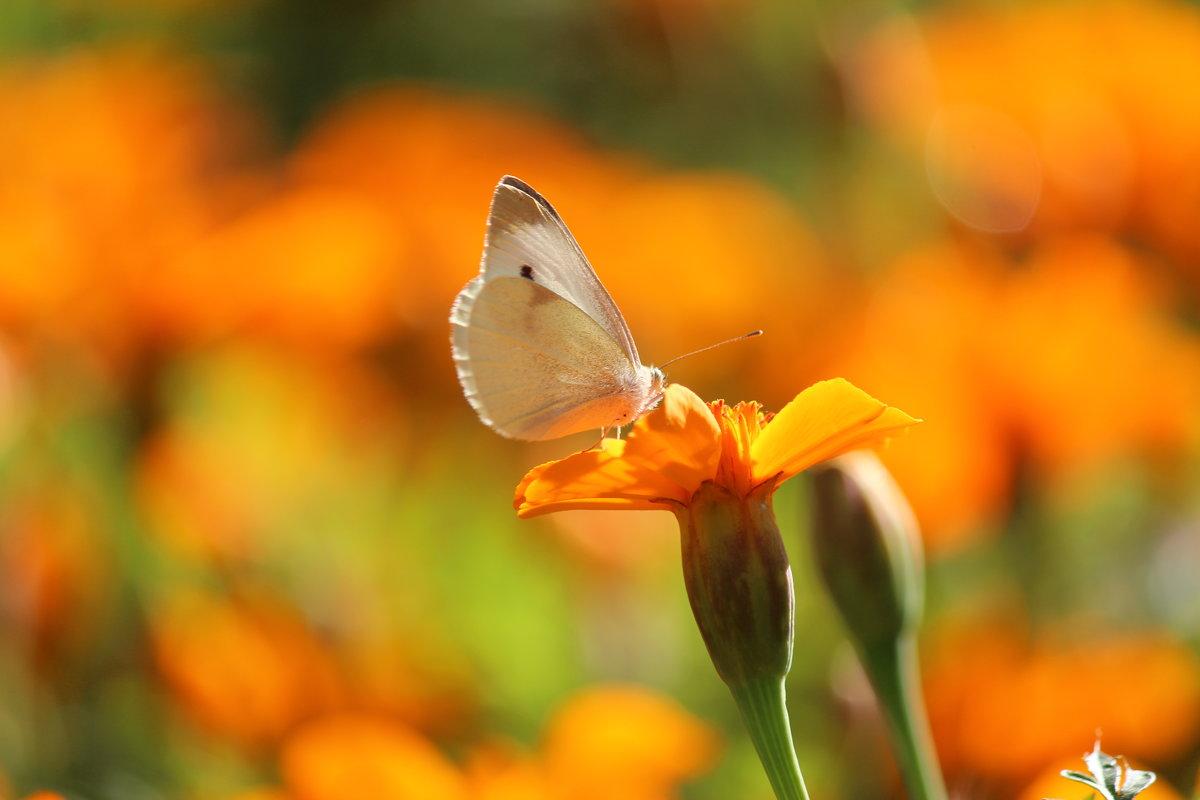 В цветочном раю - Владимир Марков