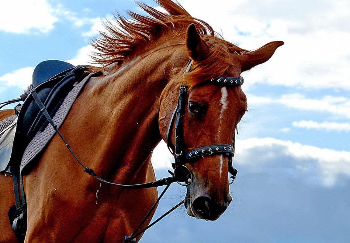 Лошади мчались, скакали,неслись.. - Тамара Бучарская