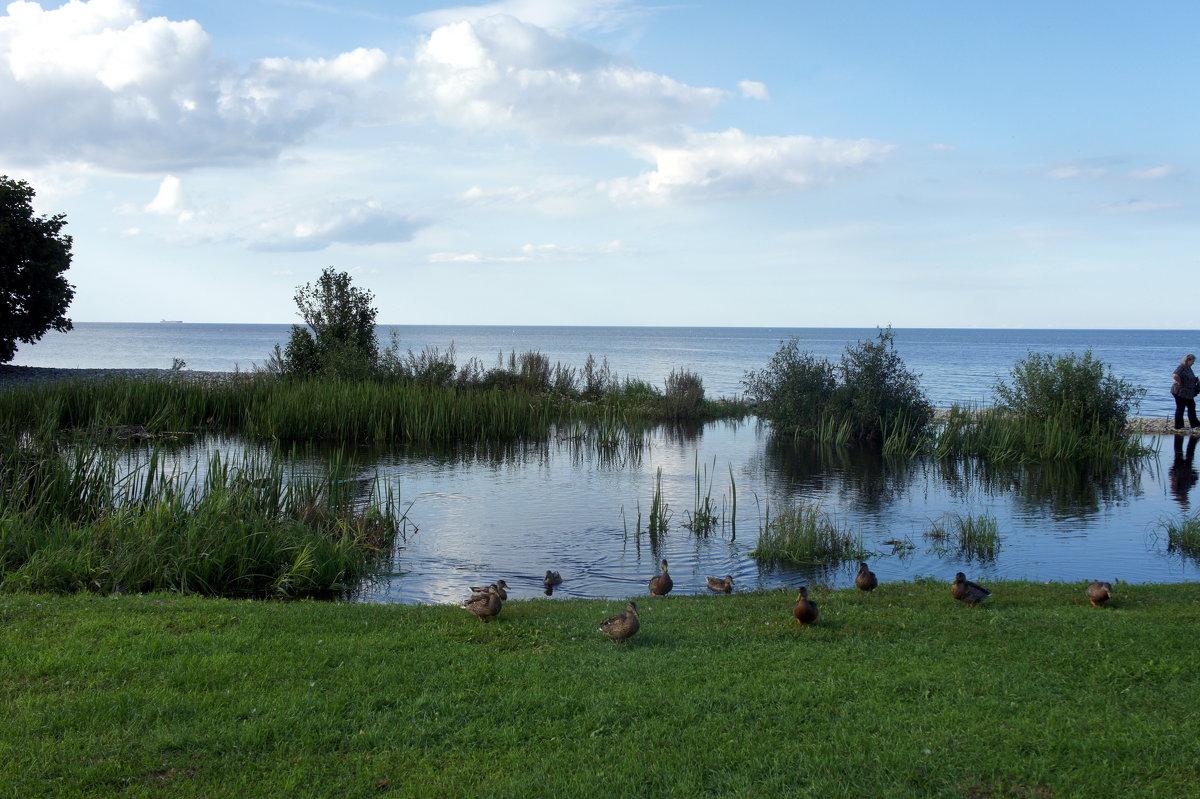 Речка Сытке впадает в море - Елена Павлова (Смолова)