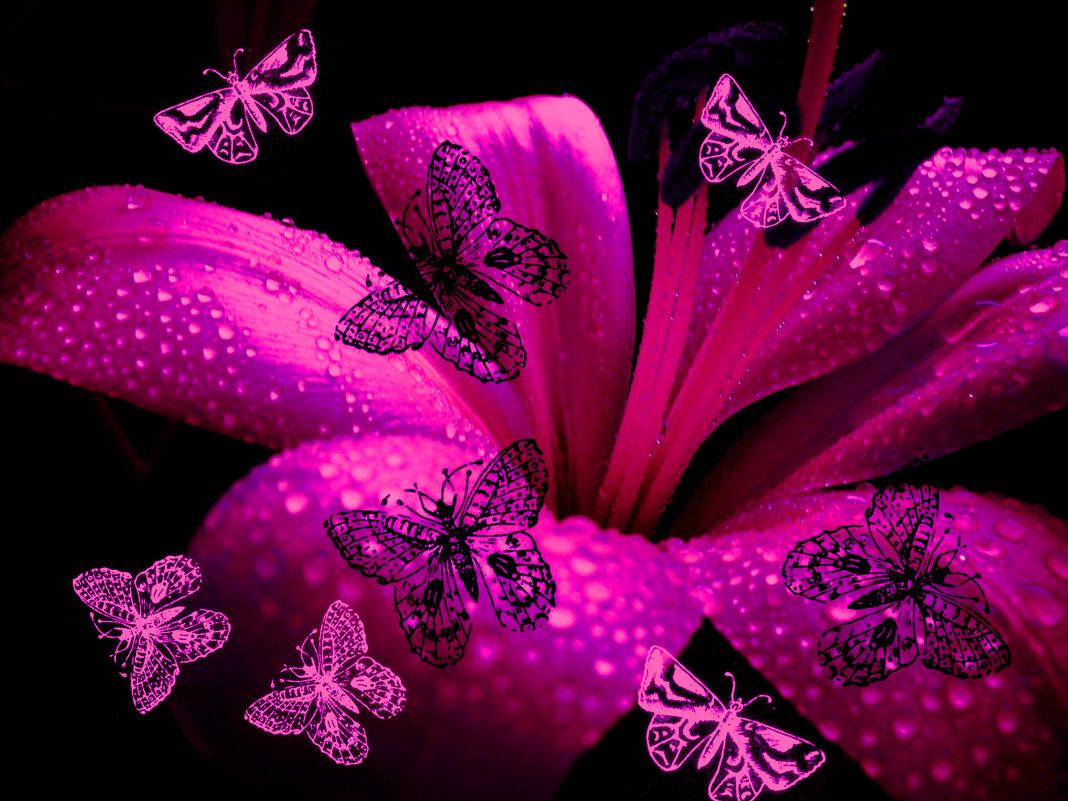 Лилия и бабочки - Victoria