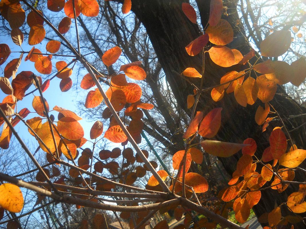 Осень - Victoria