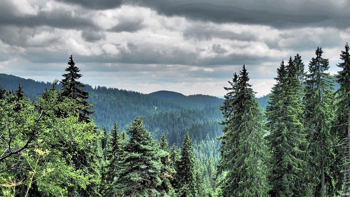 Пампорово горы Родопи - Swetlana V