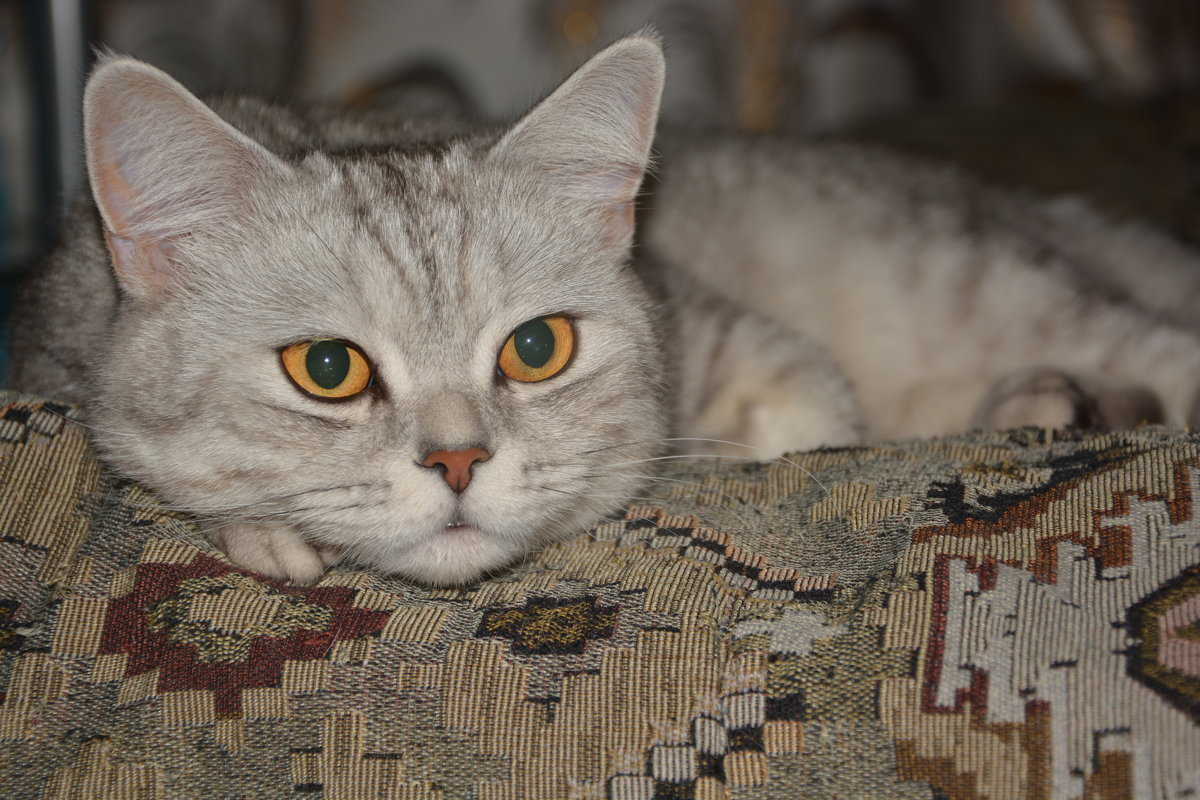Без кота никуда - Александр Швецов