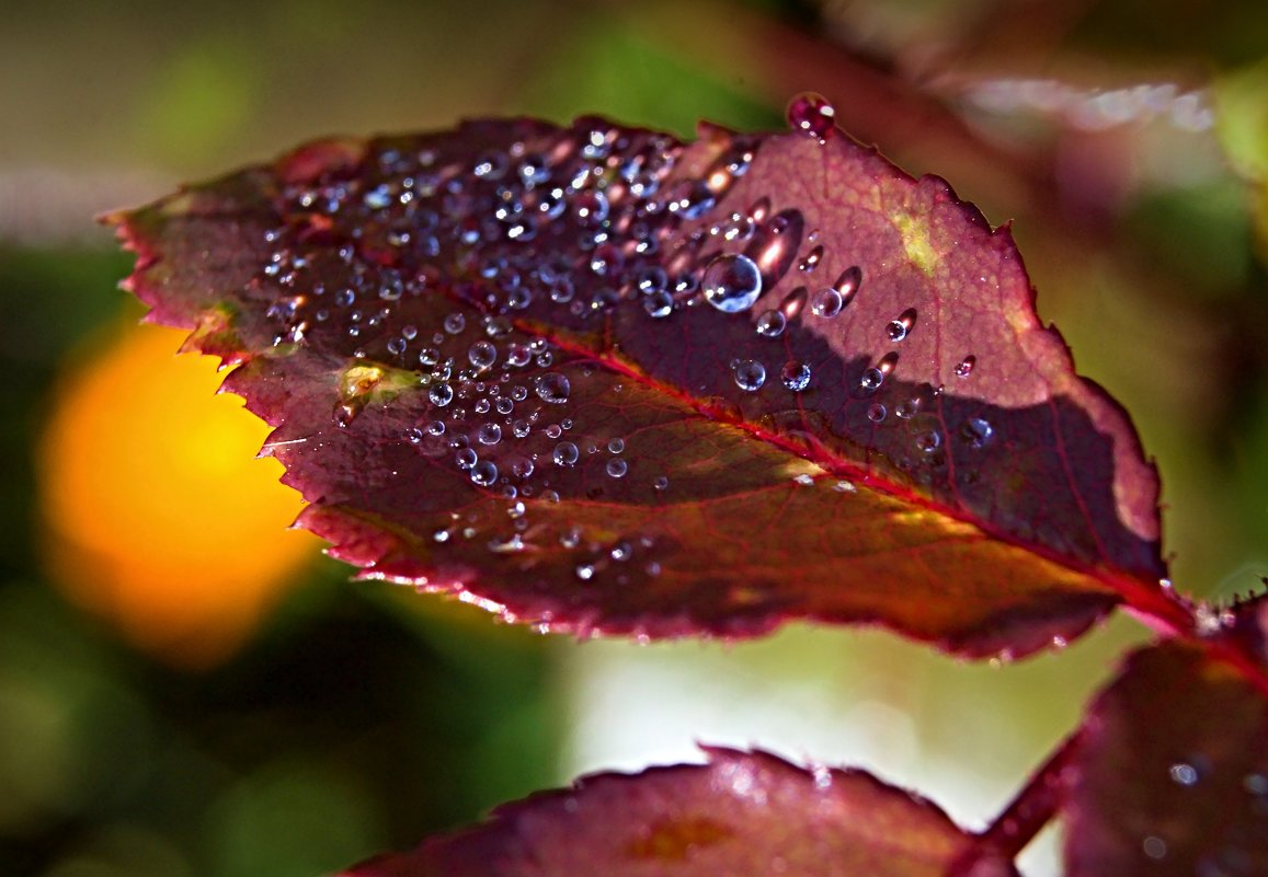 Осенний жемчуг - Константин