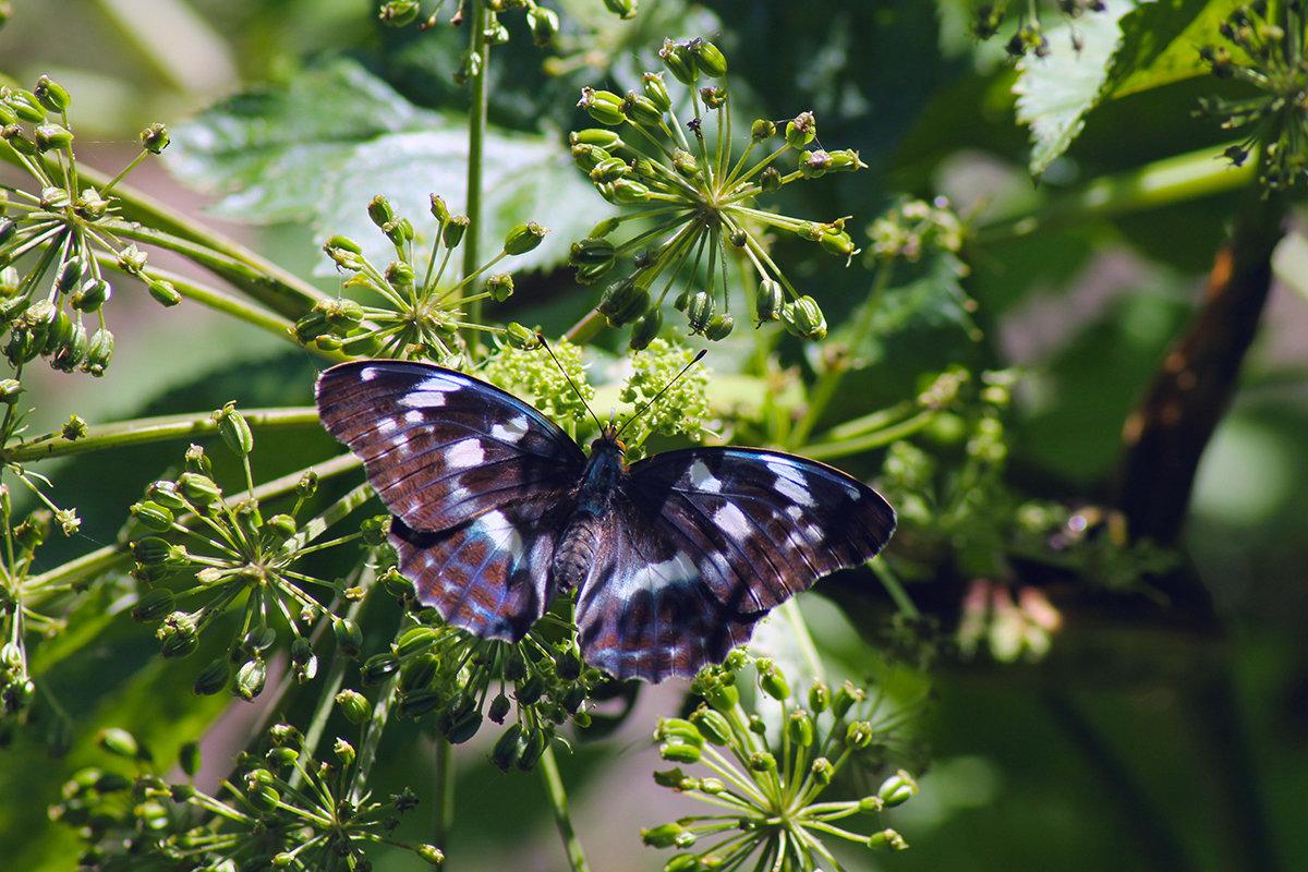 Бабочка с редкой окраской - Екатерина Торганская