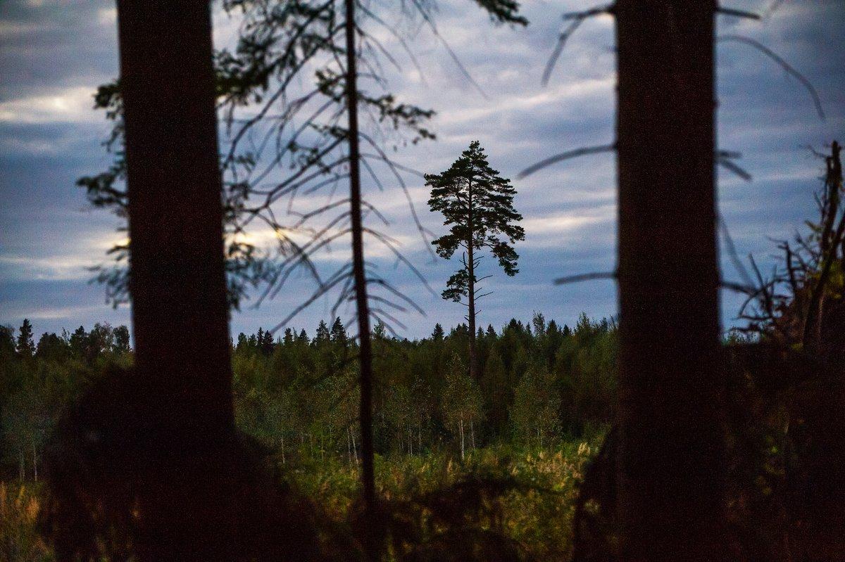 Взгляд лесоруба - Андрей Куприянов