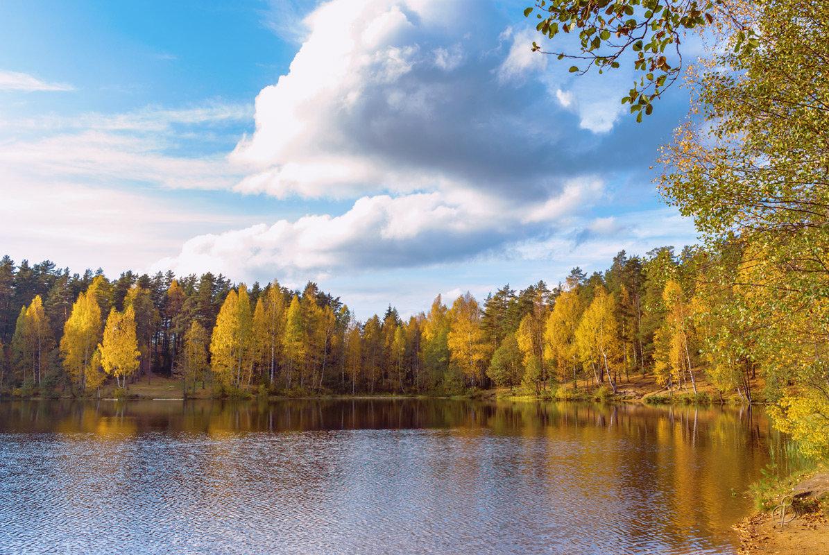 Осень на лесном озере 3 - Виталий