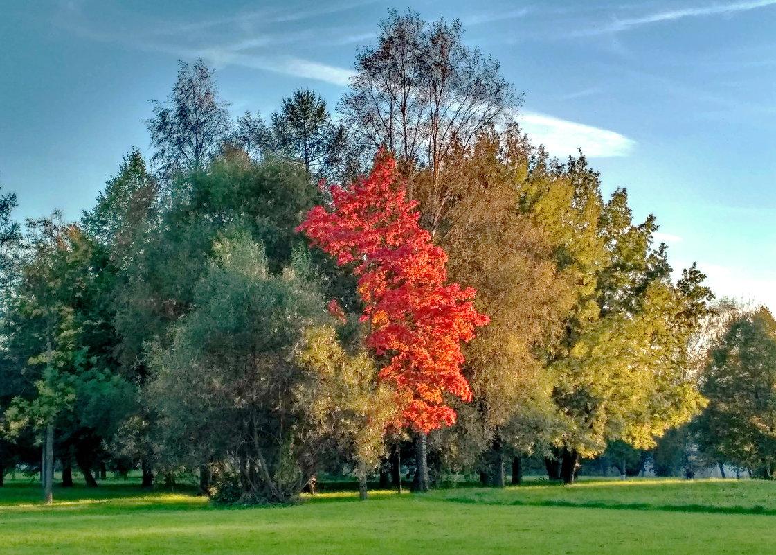 Осень клёны расцветила - Олег Попков