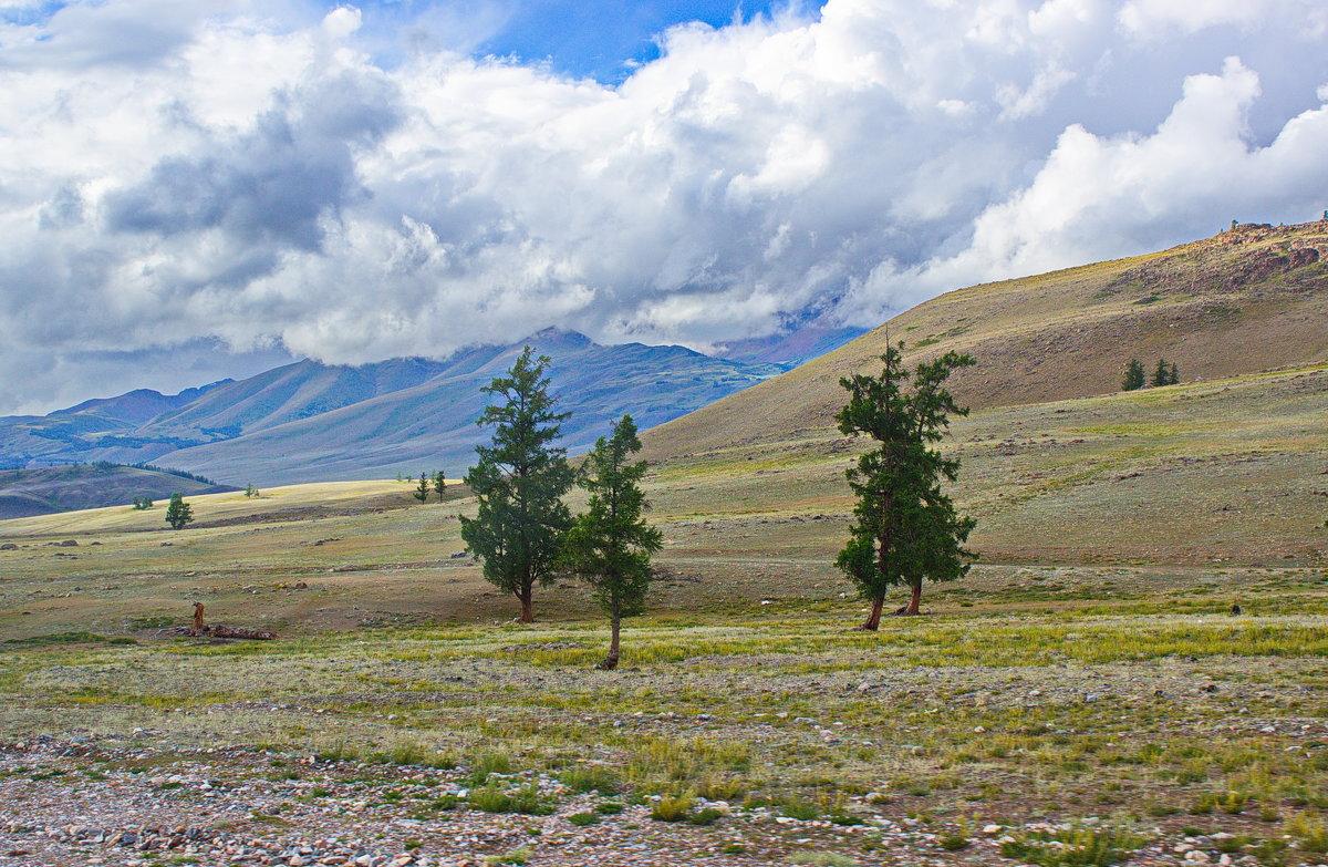 Степное редколесье - val-isaew2010 Валерий Исаев
