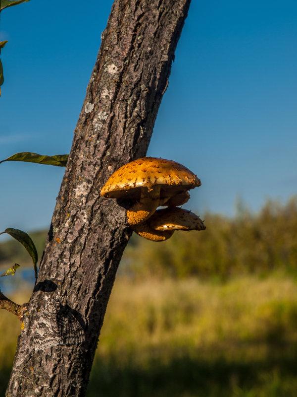 Грибное дерево - Олег Мартоник
