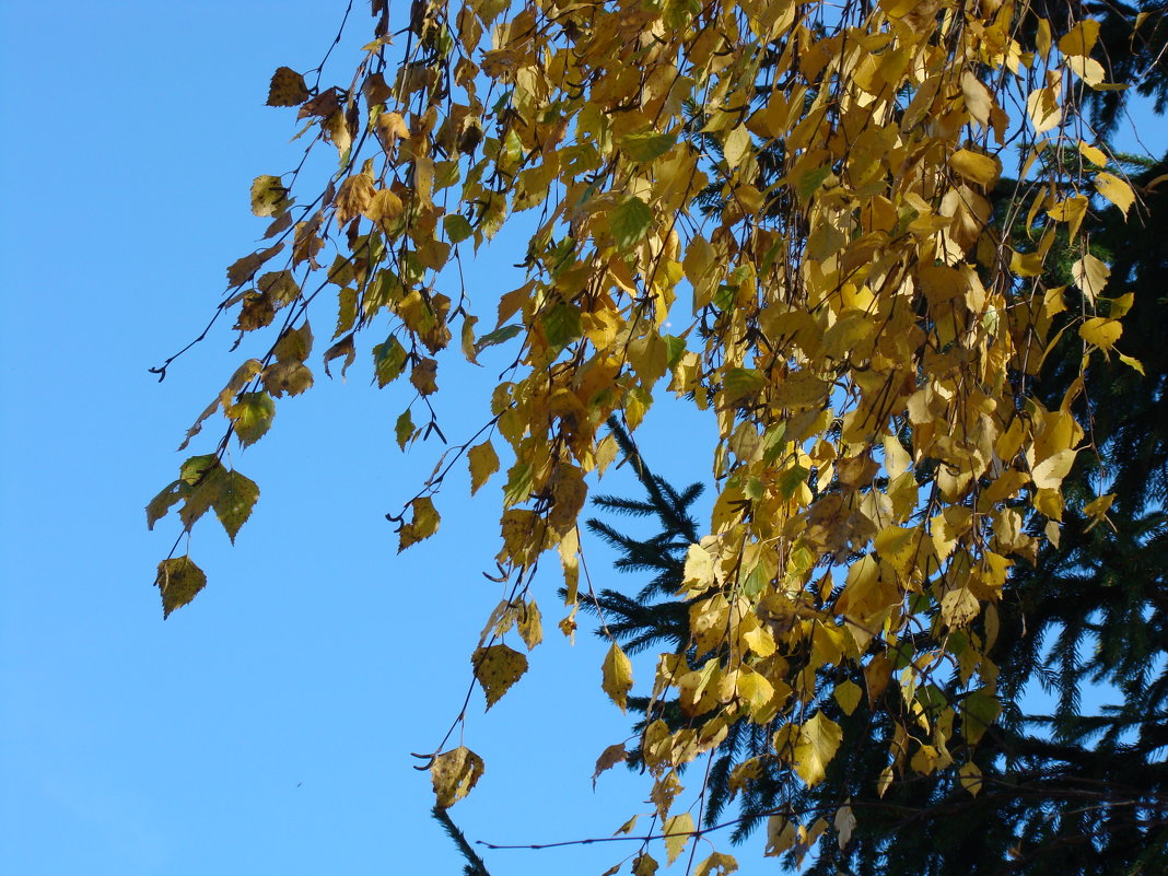 Осень золотая - Елена Якушина