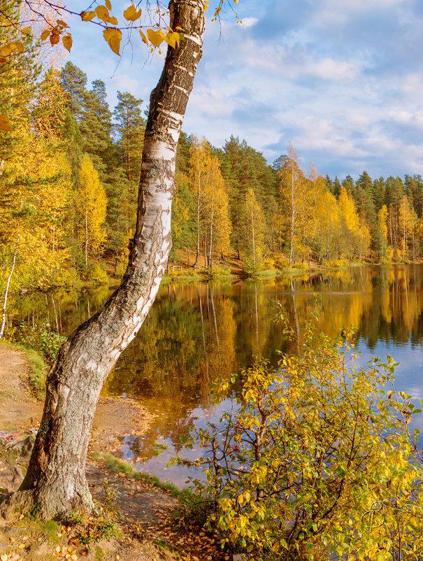 Осень на лесном озере 6 - Виталий