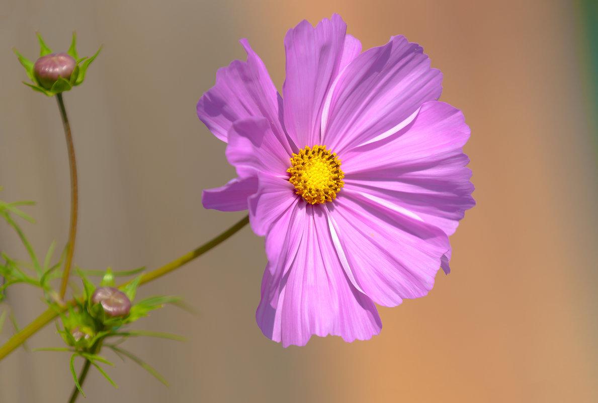 Цветок из космоса - Анатолий Иргл