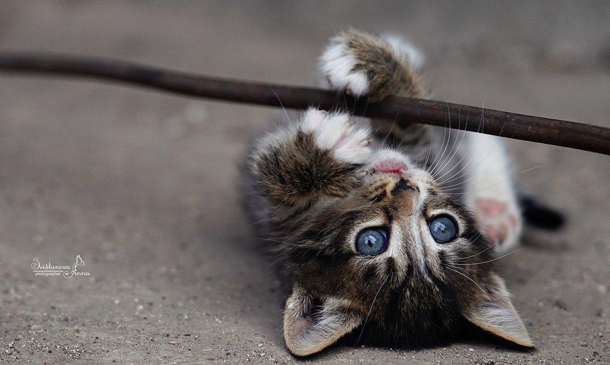 Игривый котенок - AnnetSV