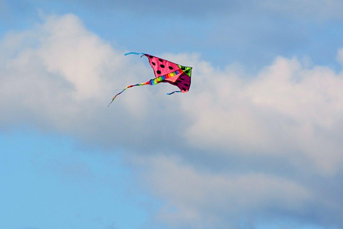воздушный змей - linnud