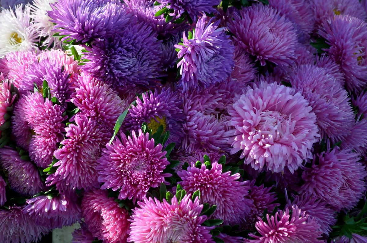 Цветы - Ростислав