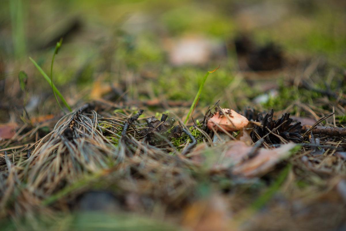 Находка в лесу - Евгений Гречкин