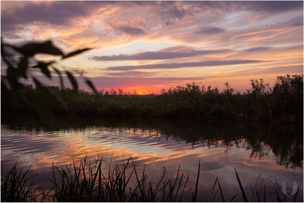 Закат на Миусе - Райская птица Бородина