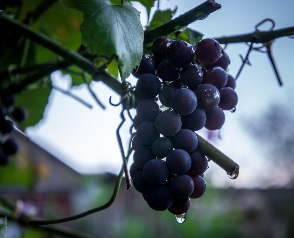 Дальневосточный виноград! - Ирина Антоновна