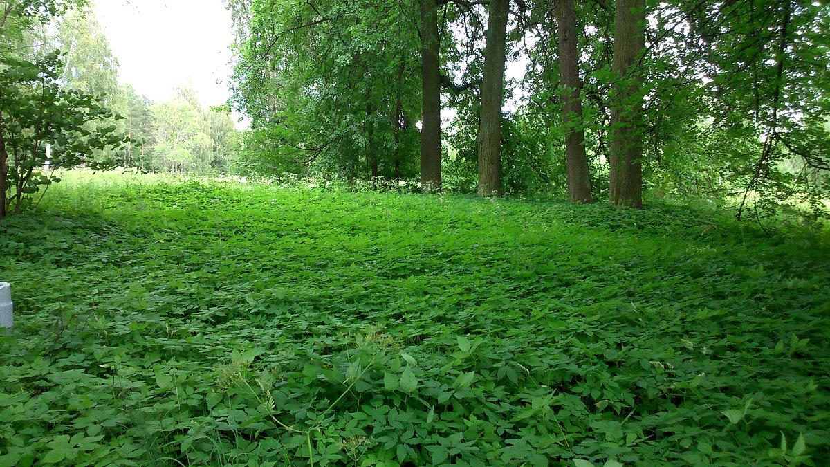 Зелёный ковёр - ЕЛЕНА СОКОЛЬНИКОВА