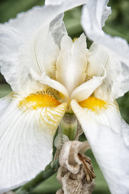 Цветок - Виктория Велес