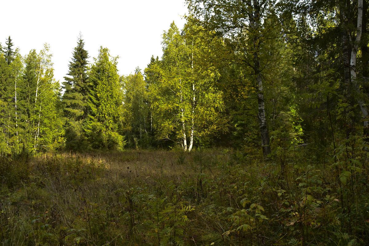 осенний лес - petyxov петухов