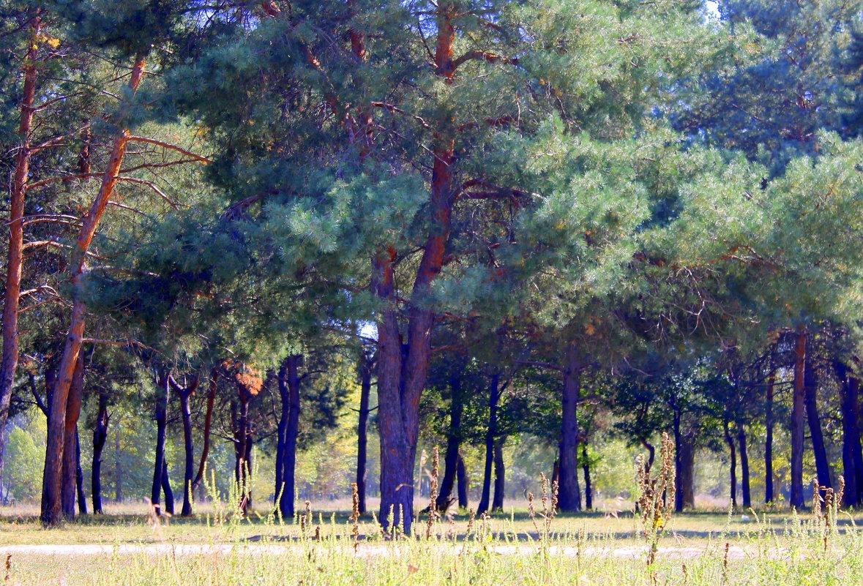 20 сентября – День леса. - Валентина ツ ღ✿ღ