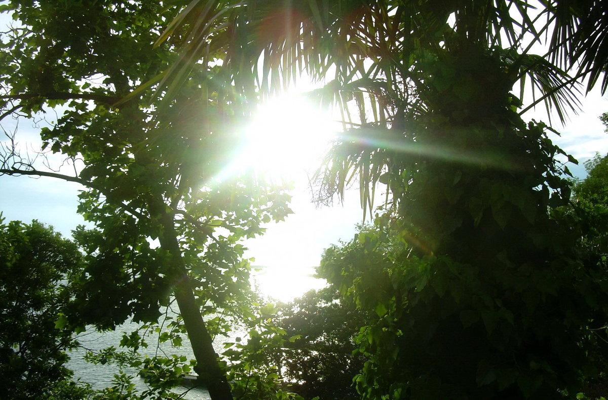 Сочи,море, солнце - татьяна