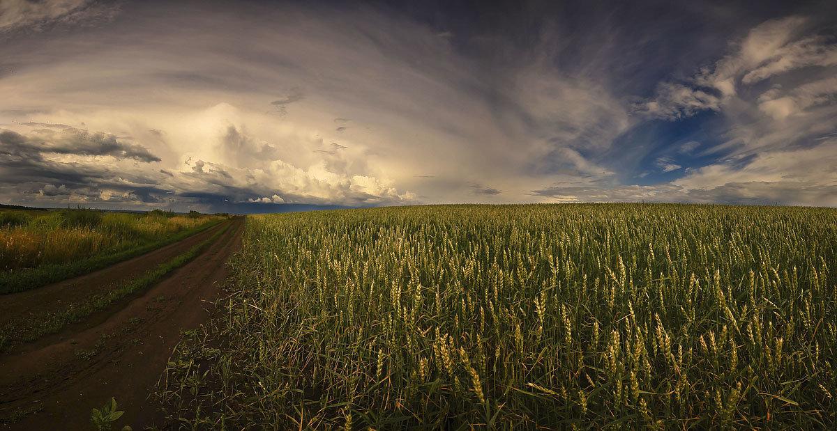 Хлебом спелым поле разродится - Сергей Жуков
