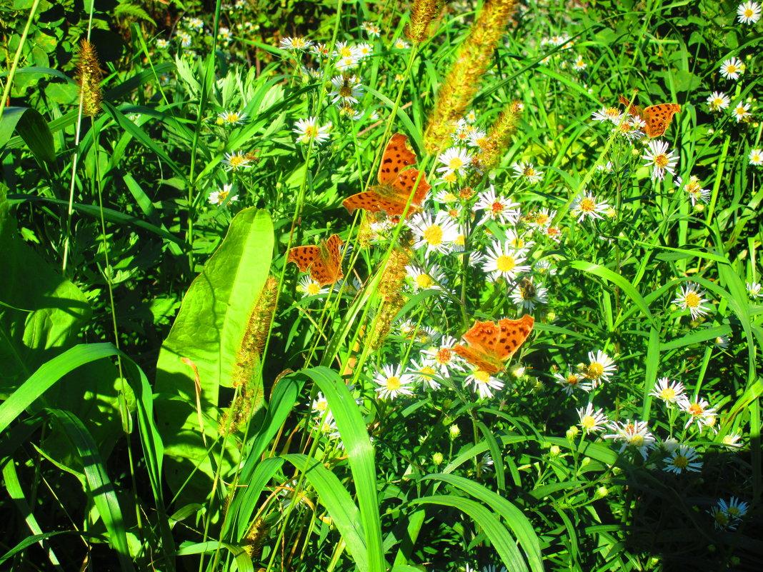 Бабочки порхают. - Татьяна ❧