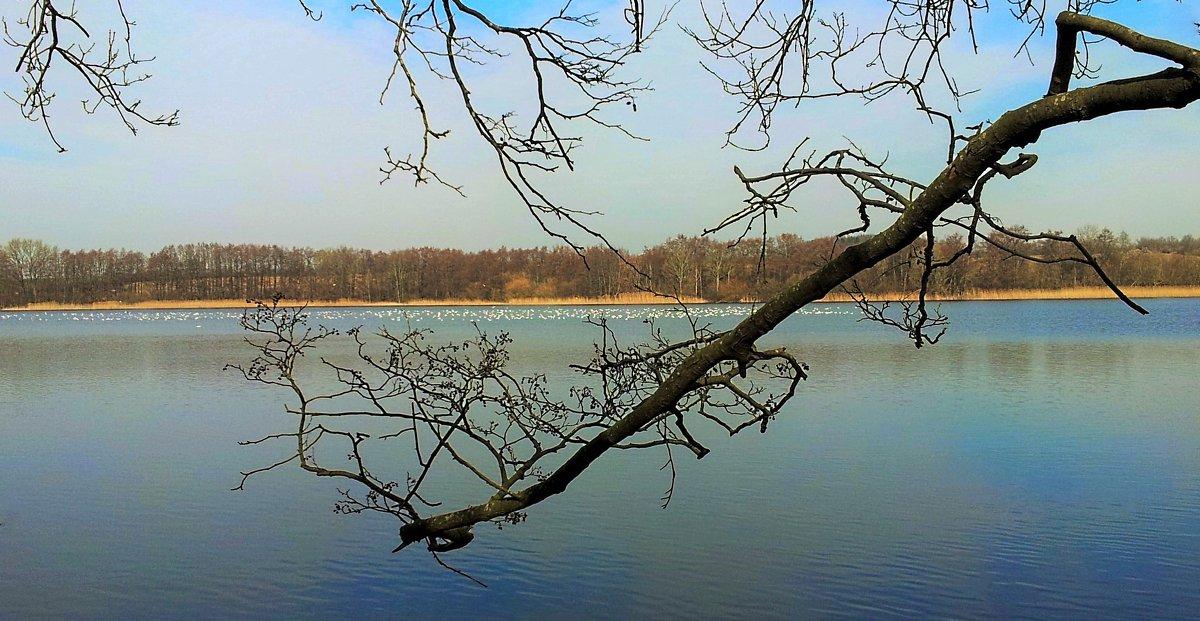 На этом озере хозяйка тишина. - Валерий Розенталь