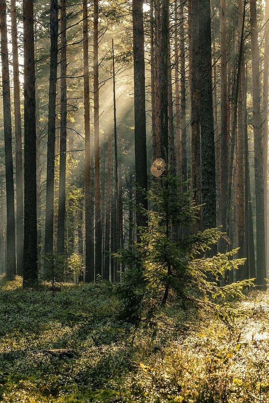 Утро в лесу - Андрей Иванов