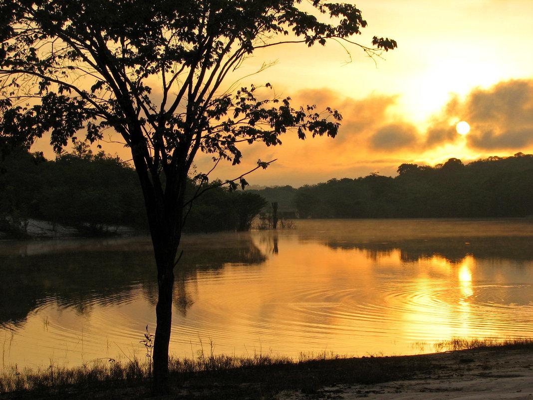 Утро в джунглях - максим лыков