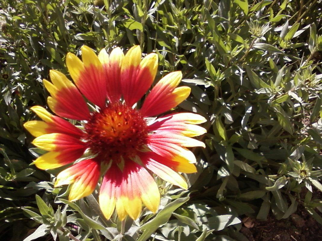Осенний цветок - Dana