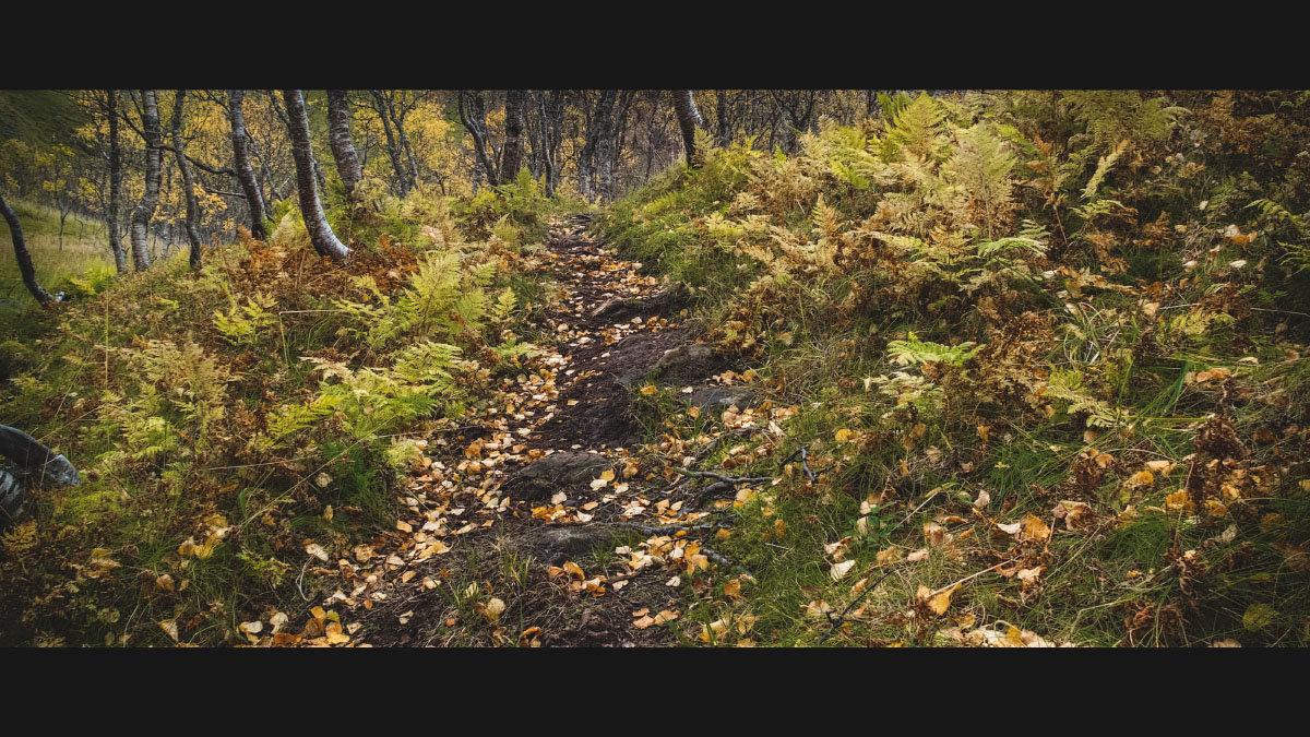 Осенняя прогулка - Sergey