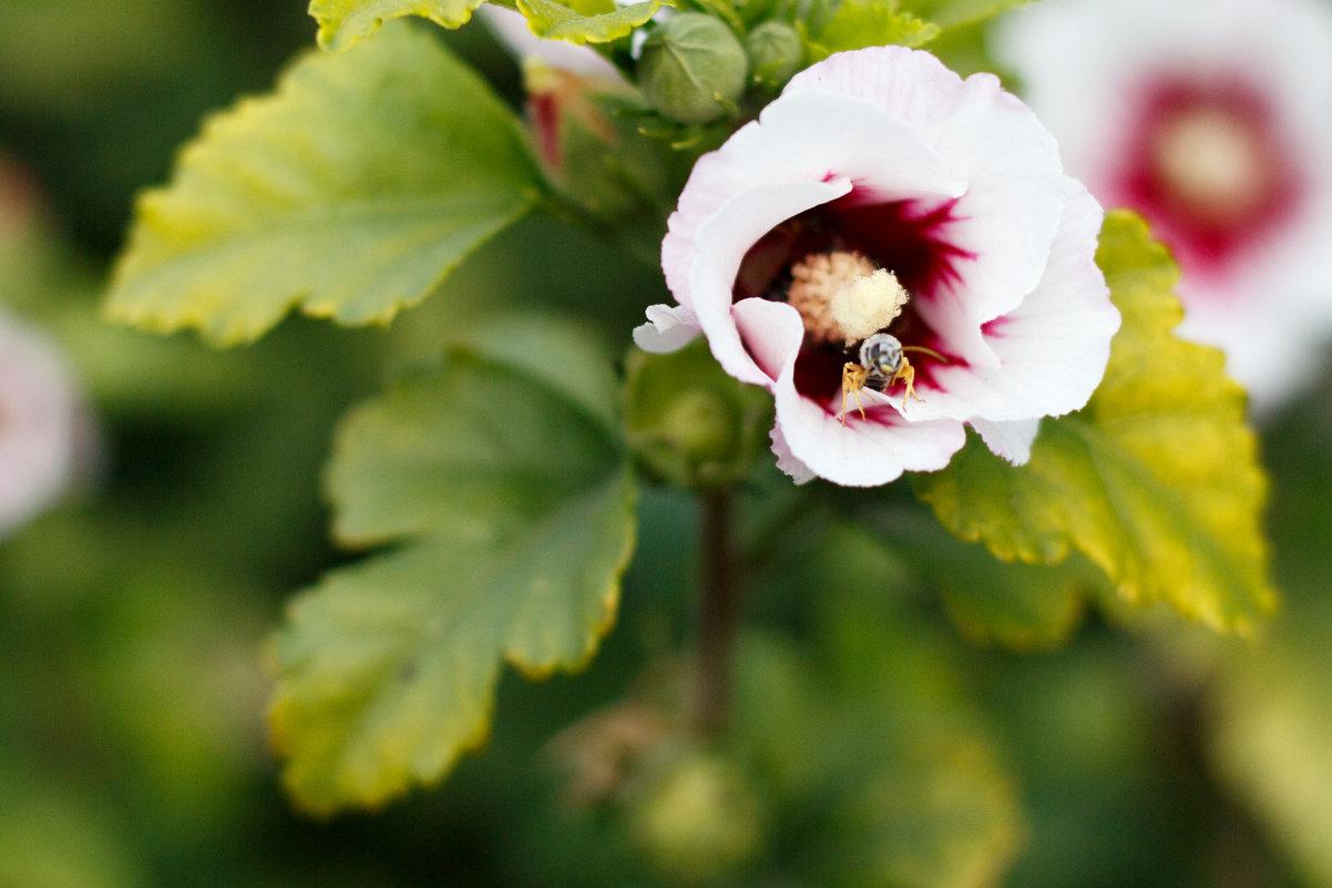 Цветок и пчела - Дмитрий Максимовский