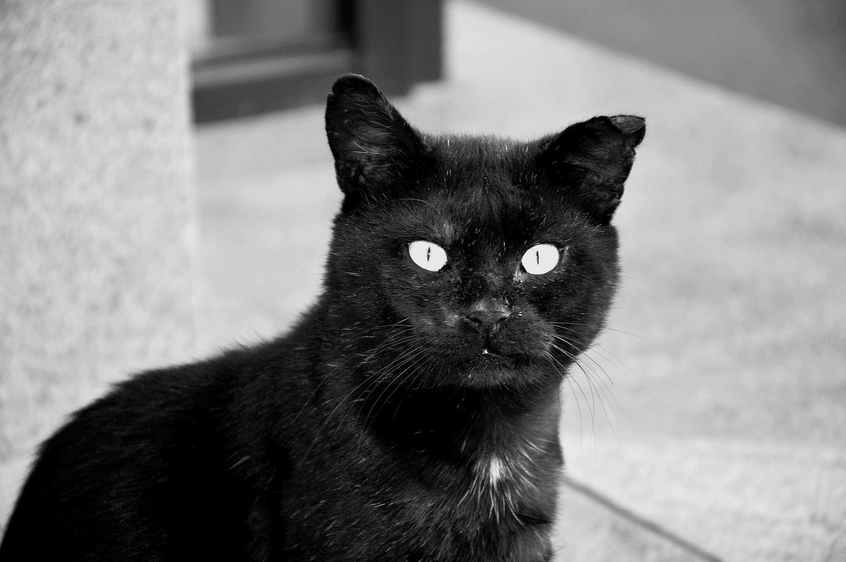 Чёрный кот - Игорь Попов