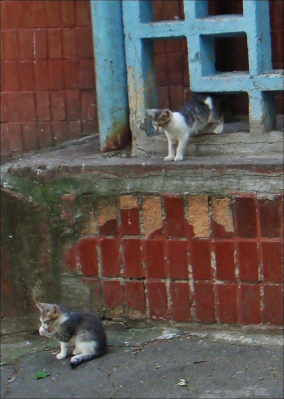 Два котёнка - Нина Корешкова