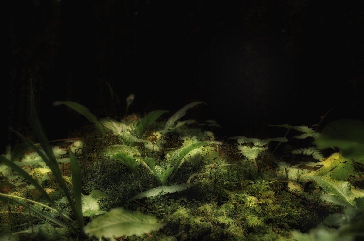 Ночь в лесу . - Va-Dim ...