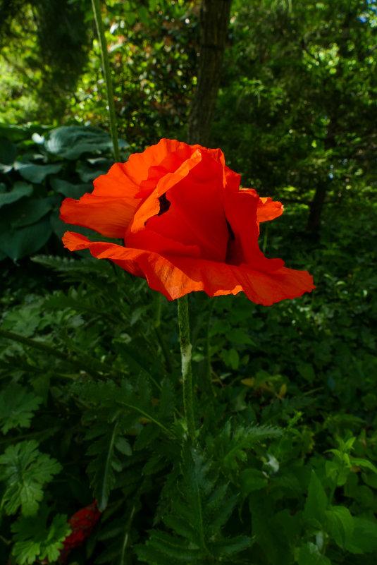 Аленький цветочек...(почти как в сказке С.Аксакова) - Юрий Поляков