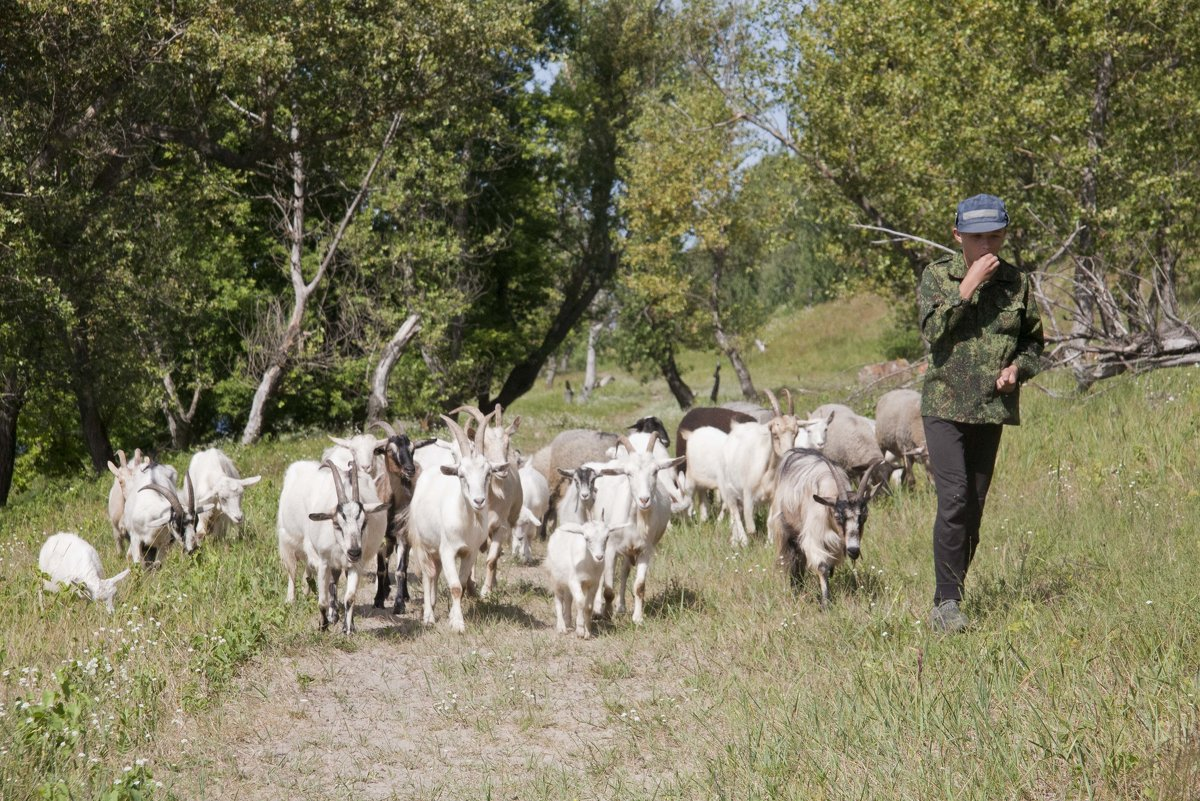 Пастушок - Татьяна Суетина