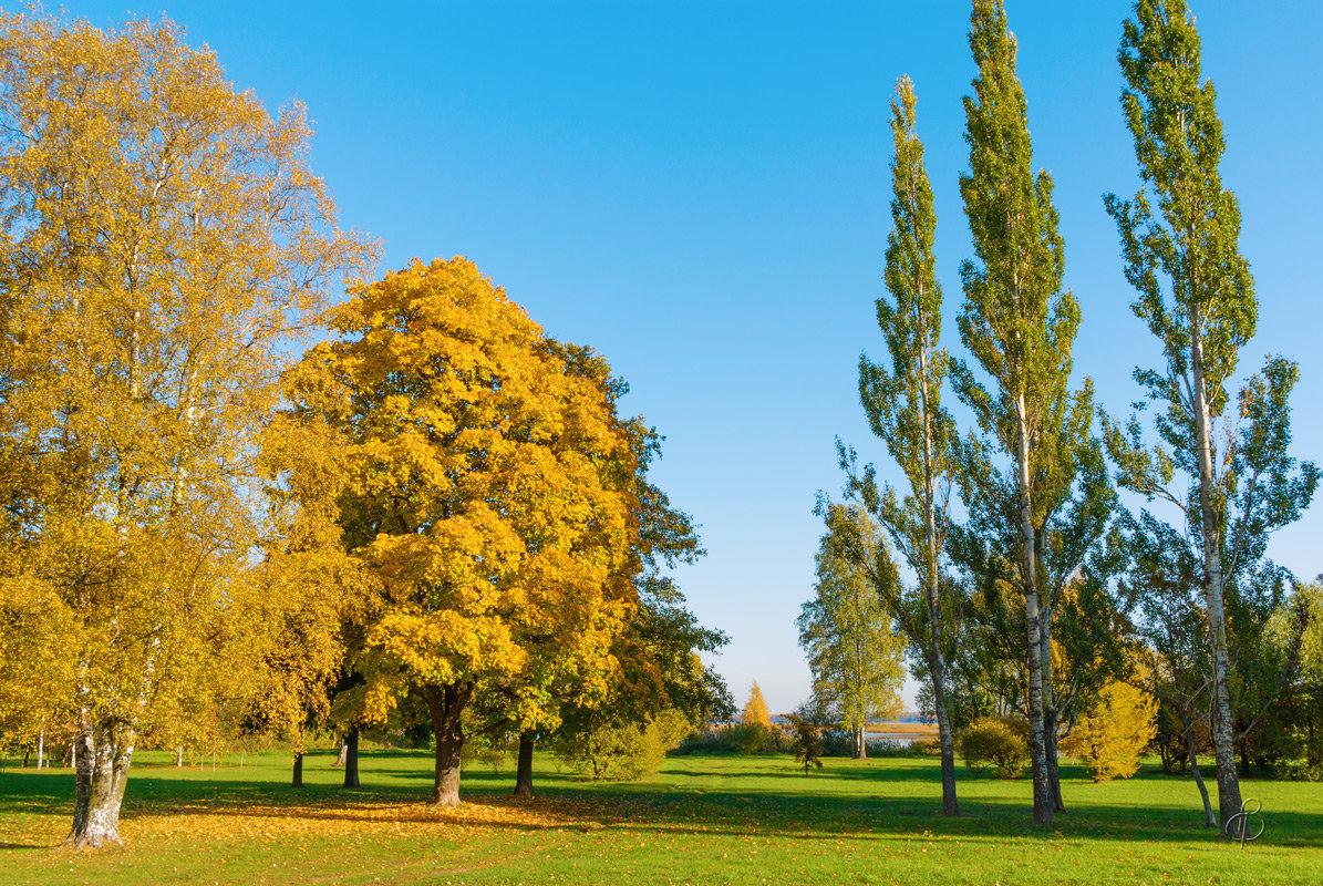 Осень на берегу Разлива 2 - Виталий