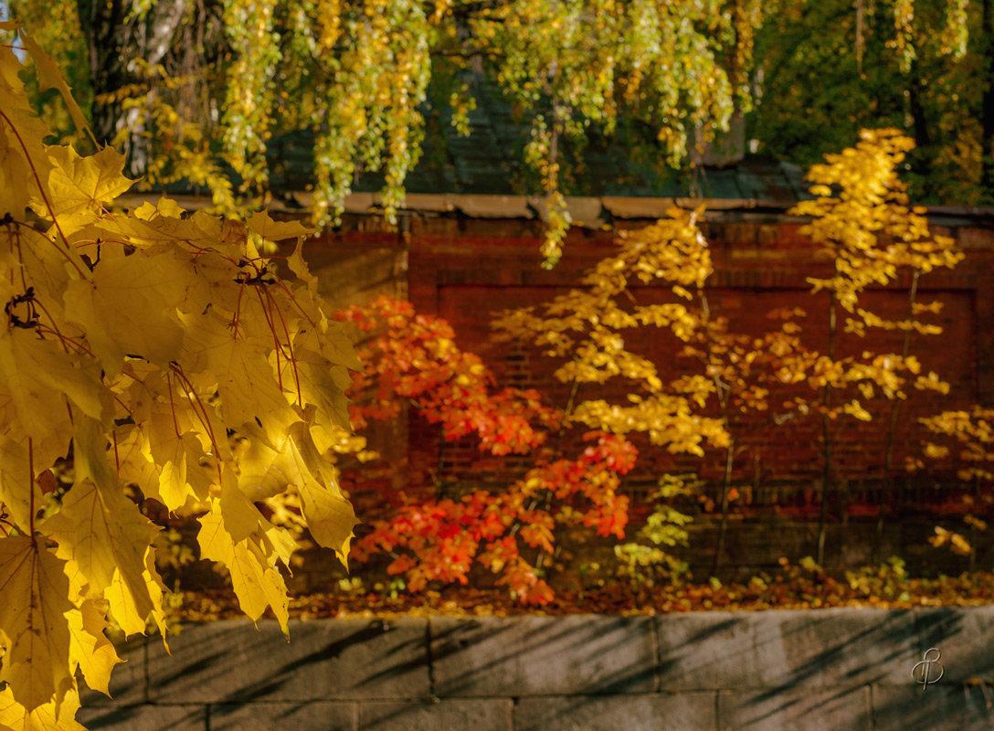 Осень живописец - Виталий