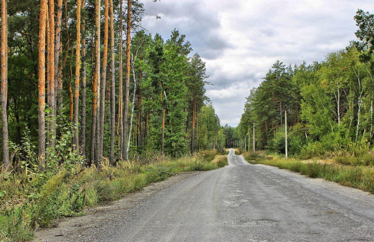 Дорога через лес. - Валентина ツ ღ✿ღ