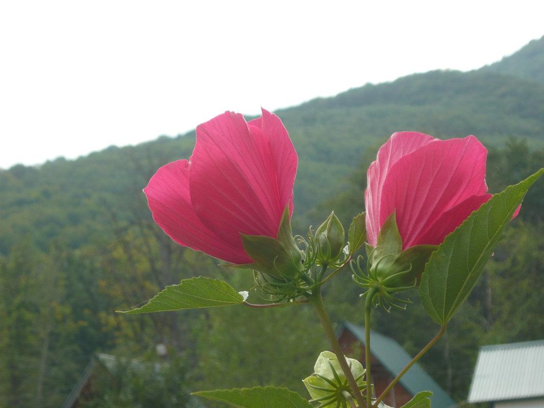 Горные цветы - Надежда