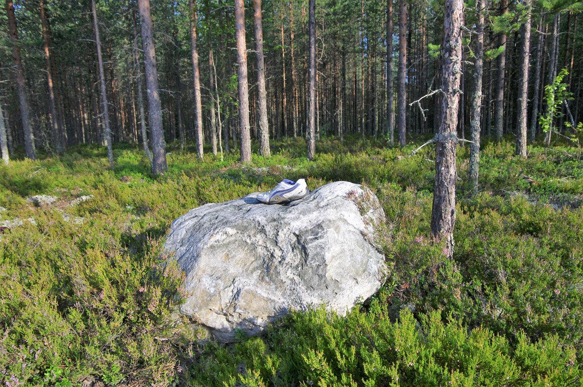 Карельский лес - Валерий Талашов
