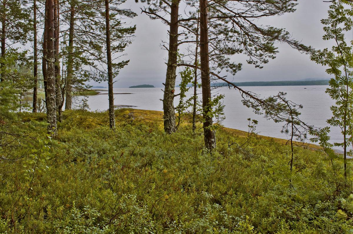 Приозерный лес - Валерий Талашов