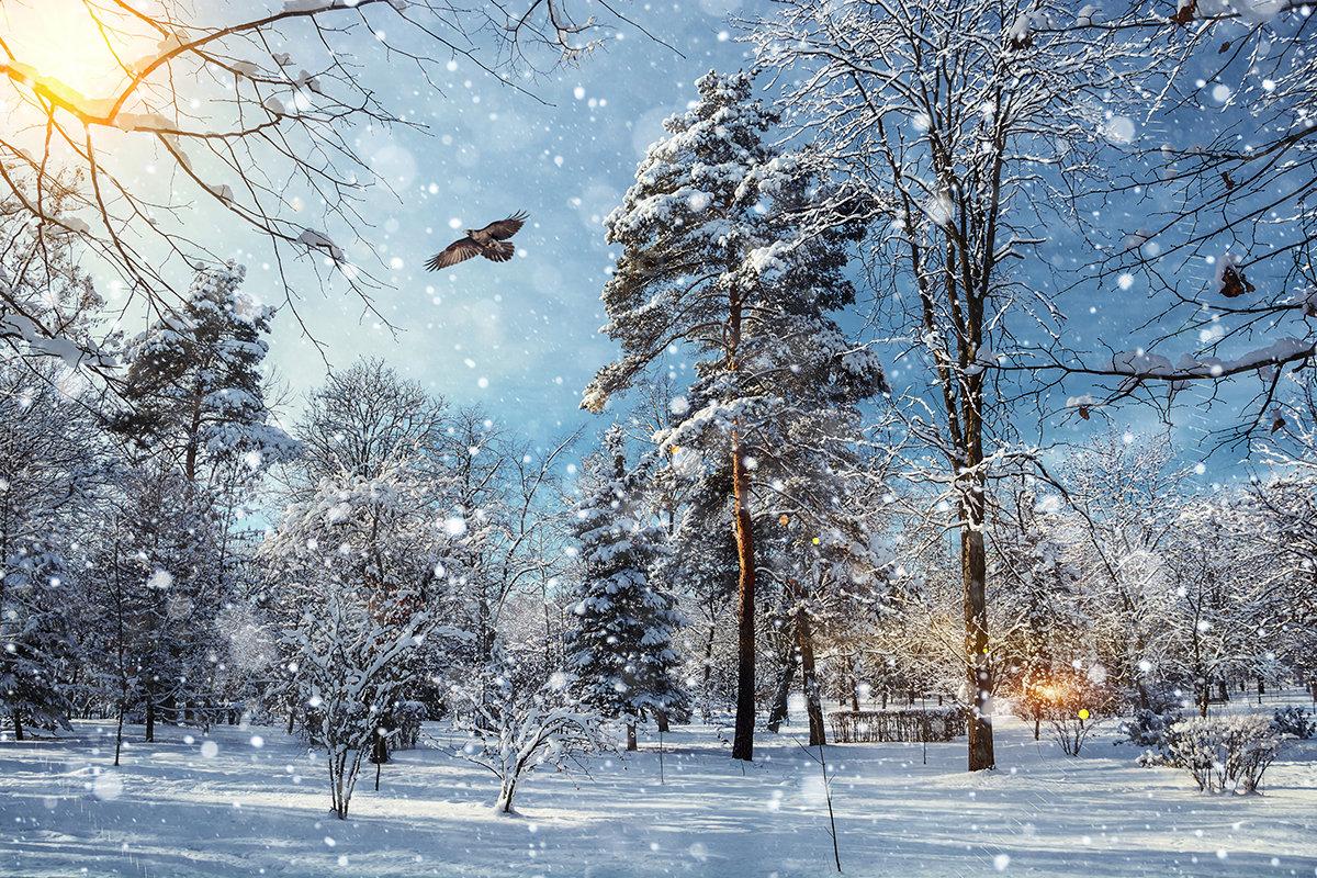 Зимний парк - Юрий Губков