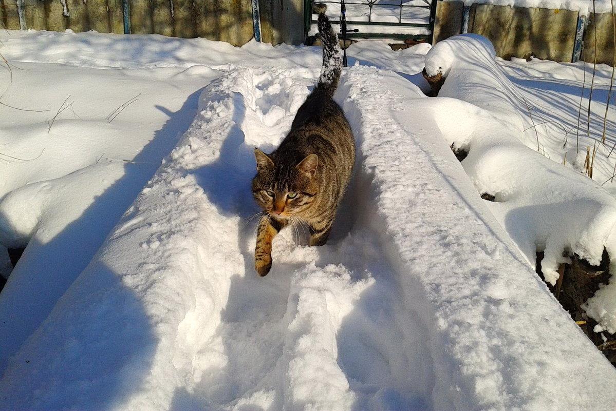 кот и прошлогодний снег - Галина Pavel
